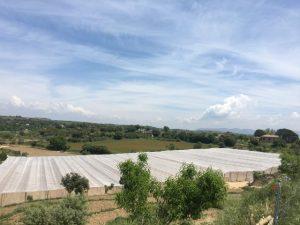Protege tus cultivos contra el pedrisco, el sol y el viento