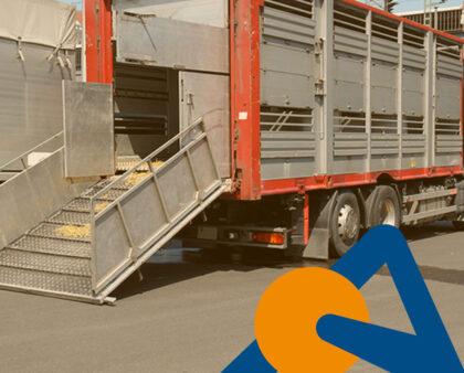 La importancia de la desinfección de vehículos de transporte en ganado