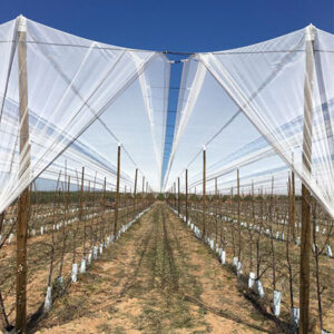 Finca en Epila Sistema V5 malla blanca para cerezos