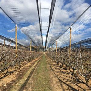 Instalación en Munebrega Sistema V5 para cerezas.