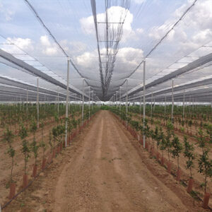 manzanos cubiertos con malla y postes de hormigón en La almunia de doña Godina