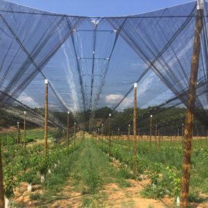 sistema V5 Miedes de Aragon